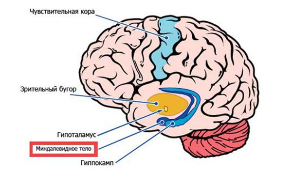 Как работает наш мозг во время прокрастинации